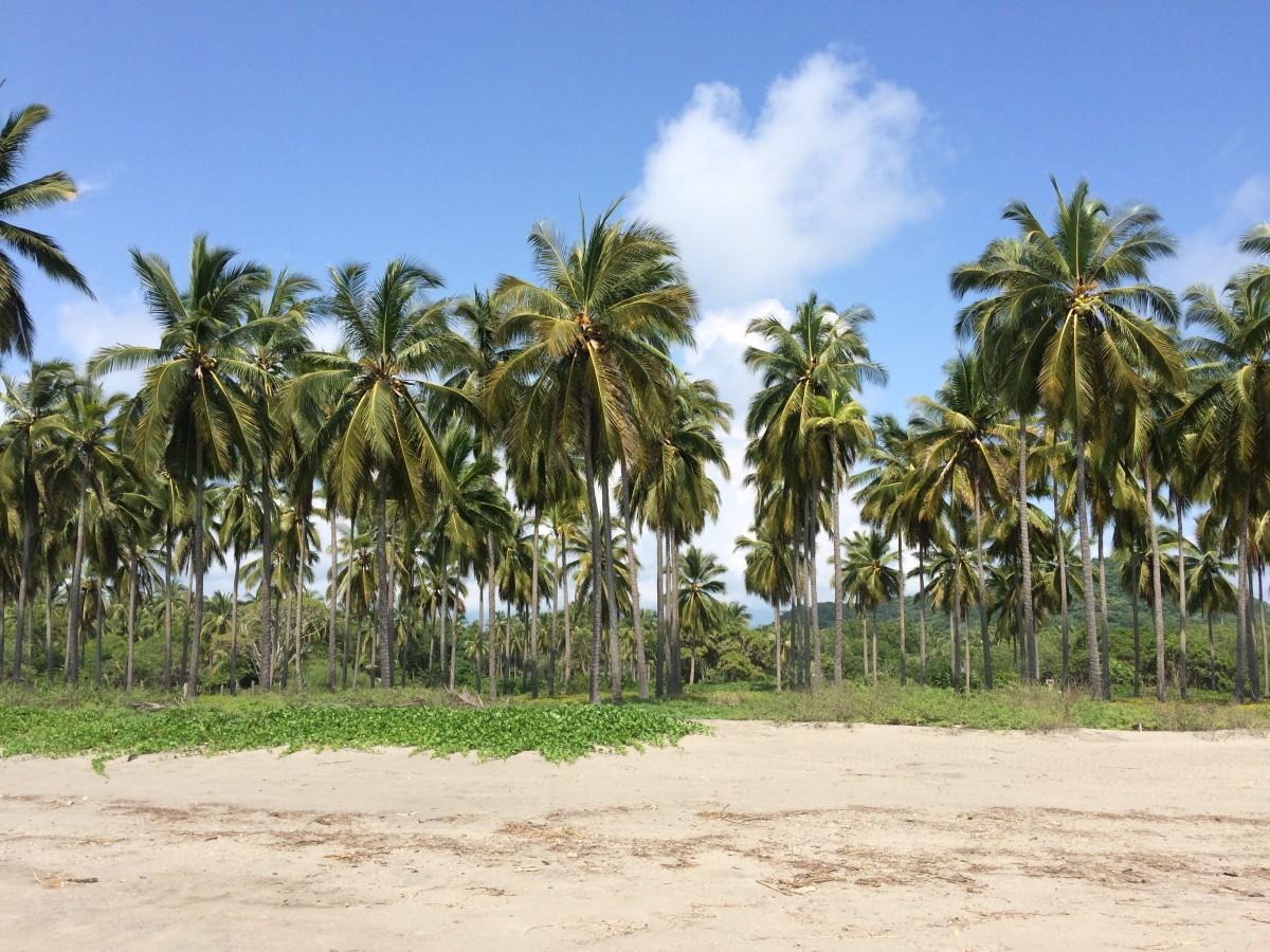 Pantla beachfront lots, Pantla Buenavista beach lots 7 and 8